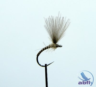 Sucha Mucha Emerger Quill Natural IV